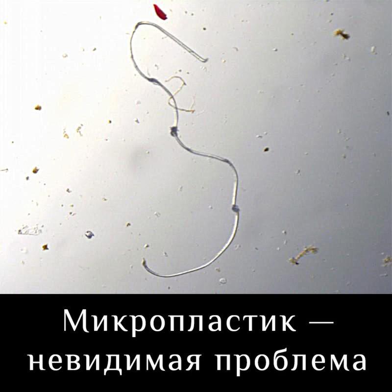 микропастик скрытая проблема